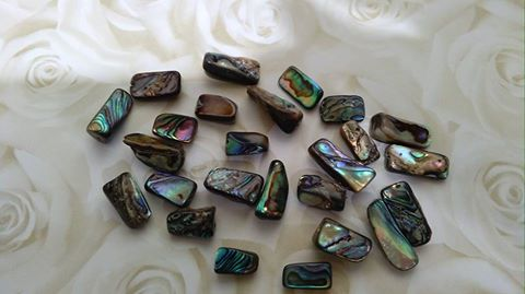 New Zealand Drilled Paua Shell Beads
