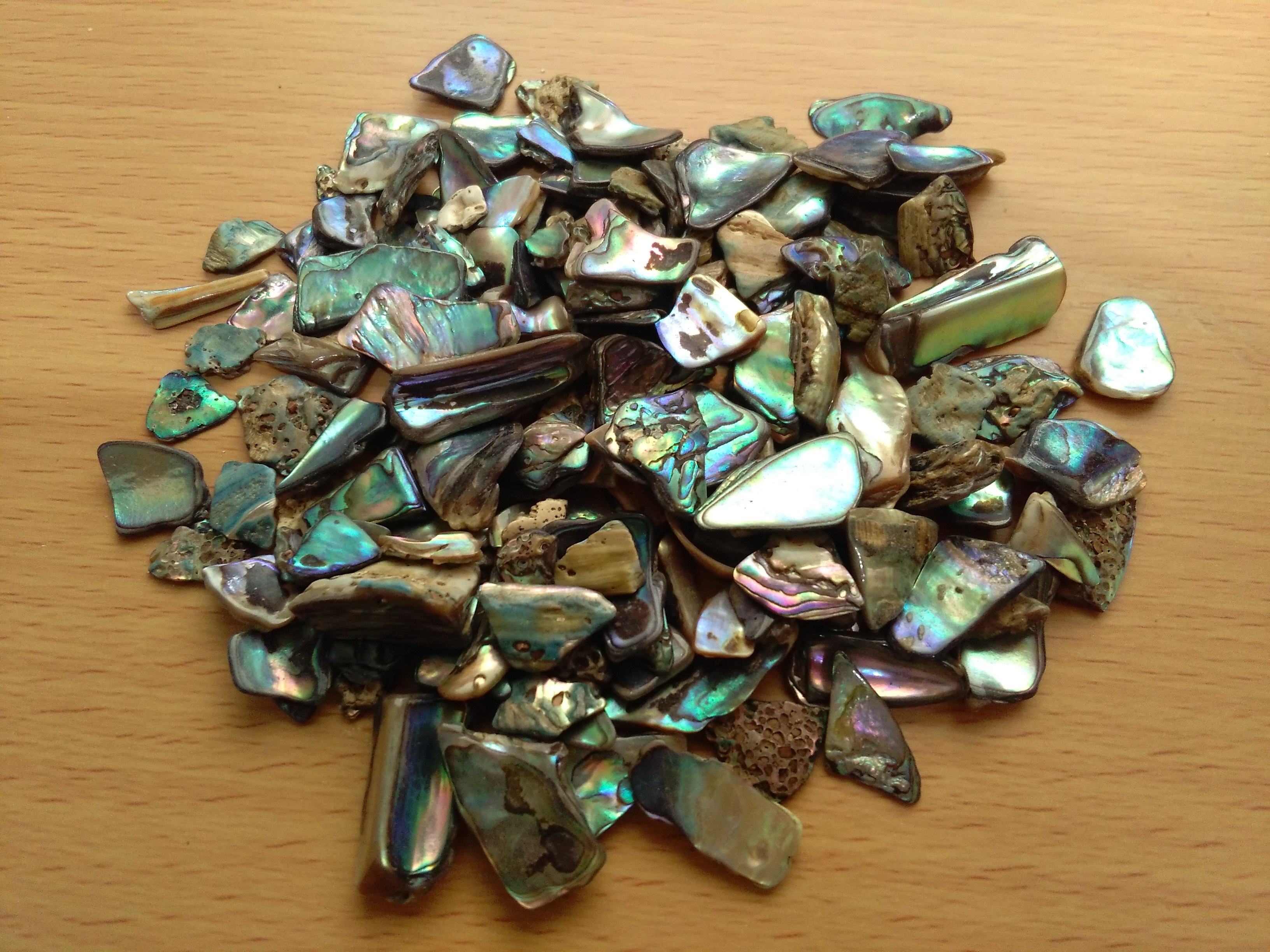 New Zealand Paua Shell Small Pieces
